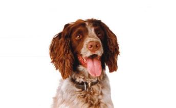 Domestic Pet Allergy